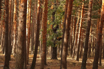 What do European forest managers want to know from scientists about mixed forests?